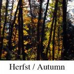 herfst-structuren